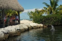 Dolphin in lagoon in front of thatched roof building (Quicklink Detail Item)