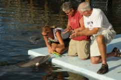 Guests with a trainer on the dock in front of a dolphin (Quicklink Detail Item)