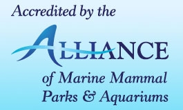 A thumbnail image for 'Alliance Accreditation'