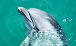 A thumbnail image for 'Don't Feed Wild Dolphins'
