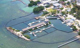Key largo dolphin research center